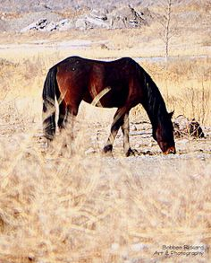 Wild Mustang by Bobbee Rickard, Nevada Artist and Photographer, prints are available. A variety of themes: Horses, Nevada, landscapes, Florals, Inspiration-Motivation Art, Creative Art, Classic Cars, and More.   Canvas Prints, Acrylic Prints, Metal Prints and Framed with Matting; Greeting Cards too.