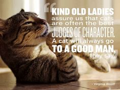 After reading these quotes you will love your pet even more. After reading these quotes you will love your pet even more. Cat Quotes, Animal Quotes, Animal Signs, Crazy Cat Lady, Crazy Cats, Silly Cats, Pet Boutique, Love Your Pet, Cool Cats