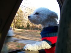 """Our Buddy -Swear he could have been a truckers dog.Just say the words """"ROAD TRIP"""" and he's there!   :)"""