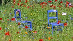 Summer wallpaper garden images