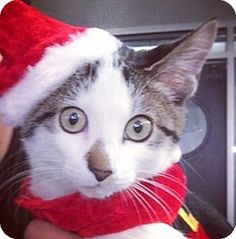 Happy holidays from French Toast!