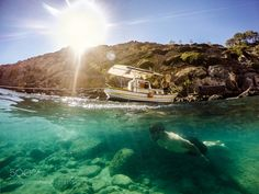 Untitled by PanagiotisMavrakis #nature #photooftheday #amazing #picoftheday #sea #underwater