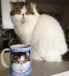 Free shipping! Ends tonight- all merch via @mreggsthecat Eggsbff https://society6.com/eggsbff mugs/pillows/tee shirts/totes/blankets/phone cases all with Arizona and your other fav internet kitties. Tag me in your photos! I'd love to see you with your stuff. ❤️