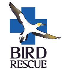 alaska bird rescue