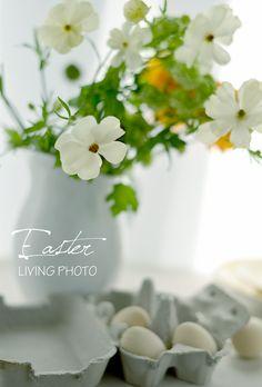 ラナンキュラス★ラックス : LIVING PHOTO