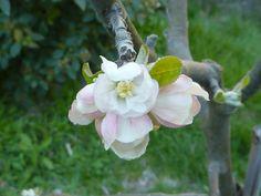 le printemps à Fontaine de Vaucluse lundi de Pâques