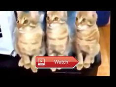 😸 funny cats compilations funny cat videos 😼 😽 from Pet Lovers 😻