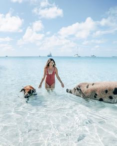 bahamas honeymoon Bucket list experiences in Exuma - swimming pigs Bahamas Eleuthera, Nassau, Bahamas Pictures, Vacation Pictures, Honeymoon Pictures, Honeymoon Ideas, Cool Places To Visit, Places To Travel, Travel Destinations