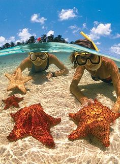 #Starfish Beach, Cayman Islands - http://vacationtravelogue.com For Hotels-Flights Bookings Globally Save Up To 80% On Travel - http://wp.me/p291tj-5x