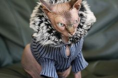 18 Best Hairless Cats Wearing Nice Sweaters Images In 2019 Sphinx