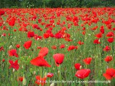 La strada dei fiori  Una foto e tre brevissime poesie che regalano  fiori. Fiori, fatti di profumo e leggerezza: sanno dire molto o anche solo tenerci compagnia (penso che la strada dei fiori non sia mai sbagliata).