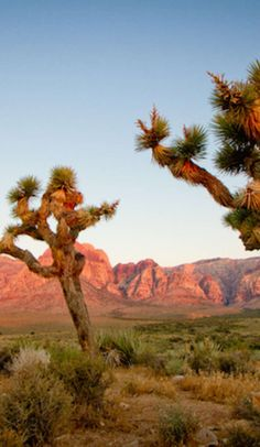 Joshua Tree National Park - Geodes and ghost towns and hot springs and so much more!