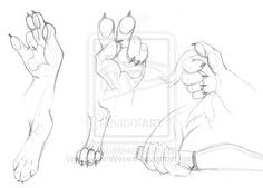 drawing anthropomorphic animals | Anthro Paws - training by LawhanWoves