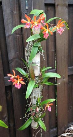 Orchid on bamboo