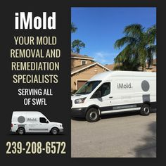 Mold Removal ServicesThe consequences of failing to properly eliminate a mold problem are enormous. Serious health risks to people and pets range from allergies to respiratory symptoms, irritation and worsening asthma.