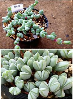 Purple tuesday 39 s that 39 s a thing right terrariumgirl Can succulents grow outside