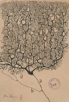 A Deep Dive Into the Brain, Hand-Drawn by the Father of Neuroscience - The New York Times