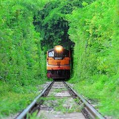 "Tree tunnel on ""Death Railway"" in Sai Yok District, Kanchanaburi, Thailand"