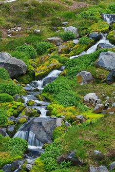 alpine stream at Summerland, lined with fresh new moss