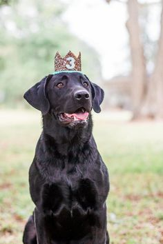 a617939318a Items similar to Dog Birthday Crown Hat