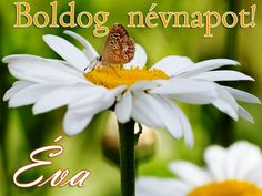 Boldog névnapot, Éva Name Day, Birthday Wishes, Blessed, Birthdays, Plants, Google, Art, Wishes For Birthday, Saint Name Day