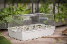 ikea_krydda_vaxer_hydroponics_gardening_kit_gardenista_11362
