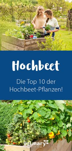 Raised bed - planting & the best varieties- Hochbeet – Bepflanzen & die besten Sorten Plants for the raised bed: information on planting ✔ The top 10 raised bed plants – you can plant these varieties ► Get information now! Plants For Raised Beds, Raised Garden Beds, Love Garden, Home And Garden, Garden Entrance, Terrace Garden, Plantation, Diy Garden Decor, Amazing Gardens