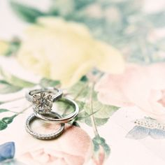 wedding rings on a bed of roses