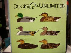 ducks unlimited decoys.
