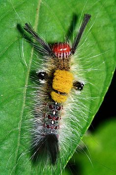 Explore Soo Ching's photos on Flickr. Soo Ching has uploaded 2750 photos to Flickr.   Caterpillar