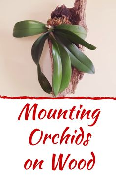 Mounting Orchids on Wood#mounting #orchids #wood House Plant Care, House Plants, Best Indoor Plants, Plant Health, Indoor Flowers, Organic Gardening Tips, Garden Guide, Replant, Orchid Care