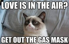 Sheldon Cooper approves this post | Community Post: 14 Hilarious Grumpy Cat Memes That Will Make You Smile