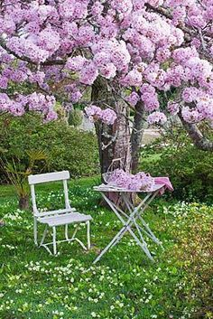 Cherry Blossom at Tregothnan by Clive Nichols My Secret Garden, Garden Trees, Parcs, Flowering Trees, Dream Garden, Garden Inspiration, Beautiful Gardens, Garden Landscaping, Outdoor Gardens