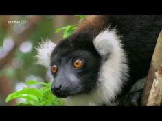 (1.5) Voyages au bout du Monde - En Afrique, Madagascar http://www.dilanntours-madagascar.com/