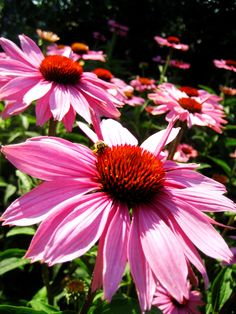 pink flowers and a bee