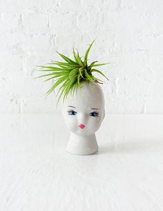 Cute/Creepy?   Air Plant Garden on Porcelain Doll Head by EarthSeaWarrior on Etsy, $45.00