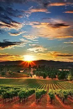 Napa Valley, California (where we honeymooned :))
