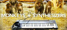 Monkeys playing synthesizers