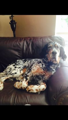 "Click visit site and Check out Best ""English Setter"" T-shirts. This website is top-notch. Tip: You can search ""your name"" or ""your favorite shirts"" at search bar on the top."