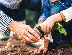 Marta Malheiro, Author at Revista Jardins - Página 4 de 5 Organic Farming, Organic Gardening, Sustainable Farming, Farm Bureau Insurance, Home Vegetable Garden, Good Environment, Garden Guide, Desert Plants, Plant Needs
