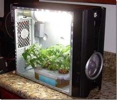 Hydroponic gardening can happen anywhere