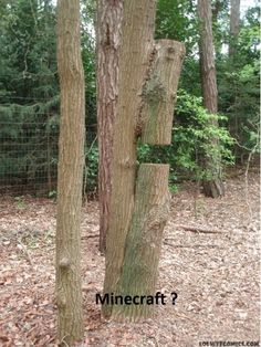 Someone punched the tree and left it floating. Come on have some decency to punch the whole tree down. If that's how minecraft is gonna be in real life don't make it real.