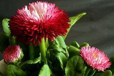 expectaculares flores - Buscar con Google