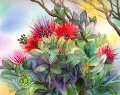 A colorful watercolor painting that captures the liveliness of the 'ōhi'a tree Watercolor Disney, Watercolor Flowers, Watercolor Paintings, Watercolour, Southwestern Paintings, Hawaii Flowers, Tribal Tattoo Designs, Cover Art, Art Lessons