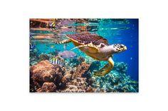 Eine Schildkröte im indischen Ozean! Diese tollen Tiere gibt es auch in Sri Lanka in verschiedenen Aufzuchtstationen zu sehen und anzufassen! Das tolle Bild gibt es übrigens für die Wohnzimmerwand zu Hause zu bestellen!