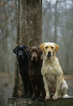 I Love Dogs, Cute Dogs, Food Dog, Animals Beautiful, Cute Animals, Rottweiler Puppies, Hunting Dogs, Duck Hunting, Dog Life