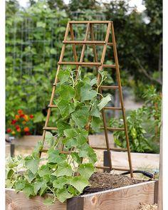 Kitchen Garden Trellis:  increases plant air circulation.