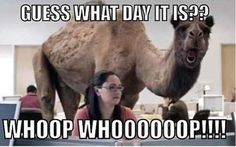 If you want to laugh and have not any reason for that, Don't worry today we collect some positive Work Memes that are so hilarious.We are sure, these positive Work Memes are able to make you laugh.Read This 29 Positive Work Memes Funny Hump Day Memes, Hump Day Quotes, Hump Day Humor, Funny Jokes, Hilarious, Funny Sayings, Funny Minion, Funny Commercials, Stupid Memes