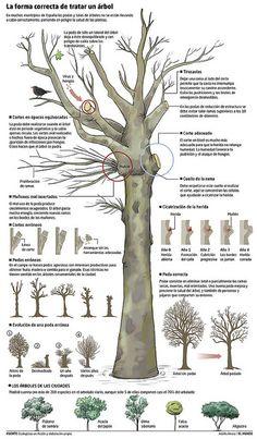 What Is Permaculture? Bonsai Garden, Garden Plants, Fruit Trees, Trees To Plant, Tree Care, My Secret Garden, Farm Gardens, Growing Plants, Garden Projects