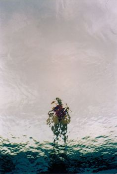 Kaitlin Sandeno / Underwater / Photographie / Abstract / Art / Hide